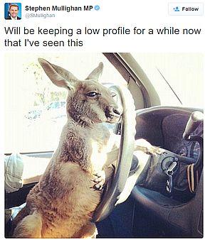 2 self-driving kangaroo